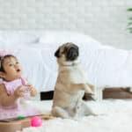 赤ちゃんと犬の暮らしにはどんなリスクがある?リスクを減らす方法もご紹介